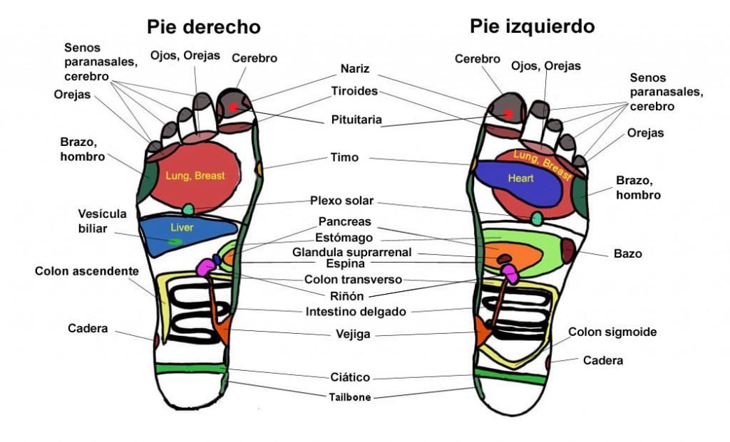 mapa-pies-reflexologia-podal español copia